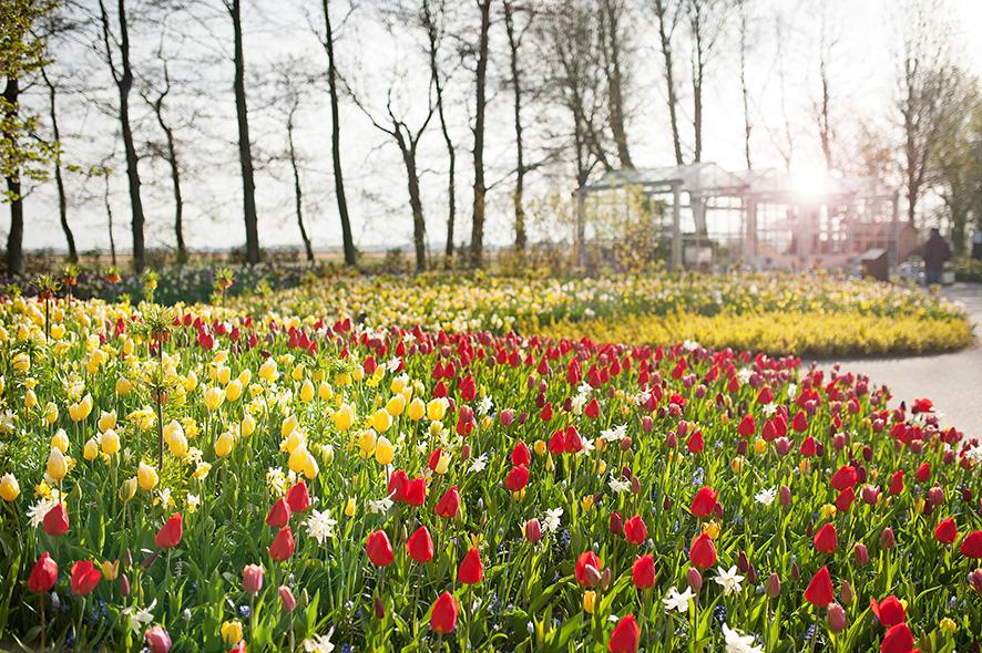 kurzreisen zur tulpenbl te in zuid holland familie mit fernweh. Black Bedroom Furniture Sets. Home Design Ideas